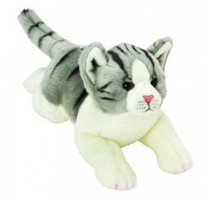 Grey/White Tabby Cat
